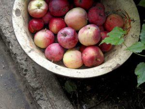apples-182792_960_720